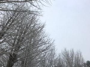冬の銀杏の木